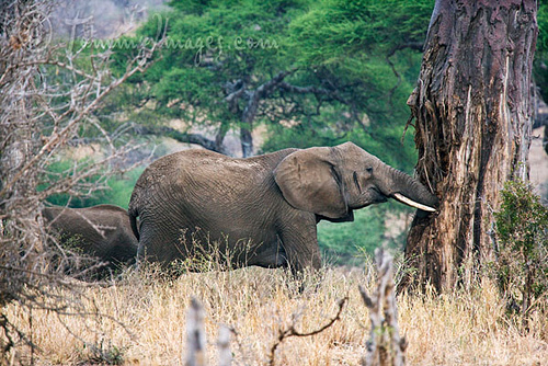 About Elephants – Page 2 – Wildlife Research & Conservation