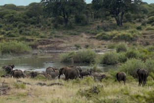 Elephant Conservation – Wildlife Research & Conservation