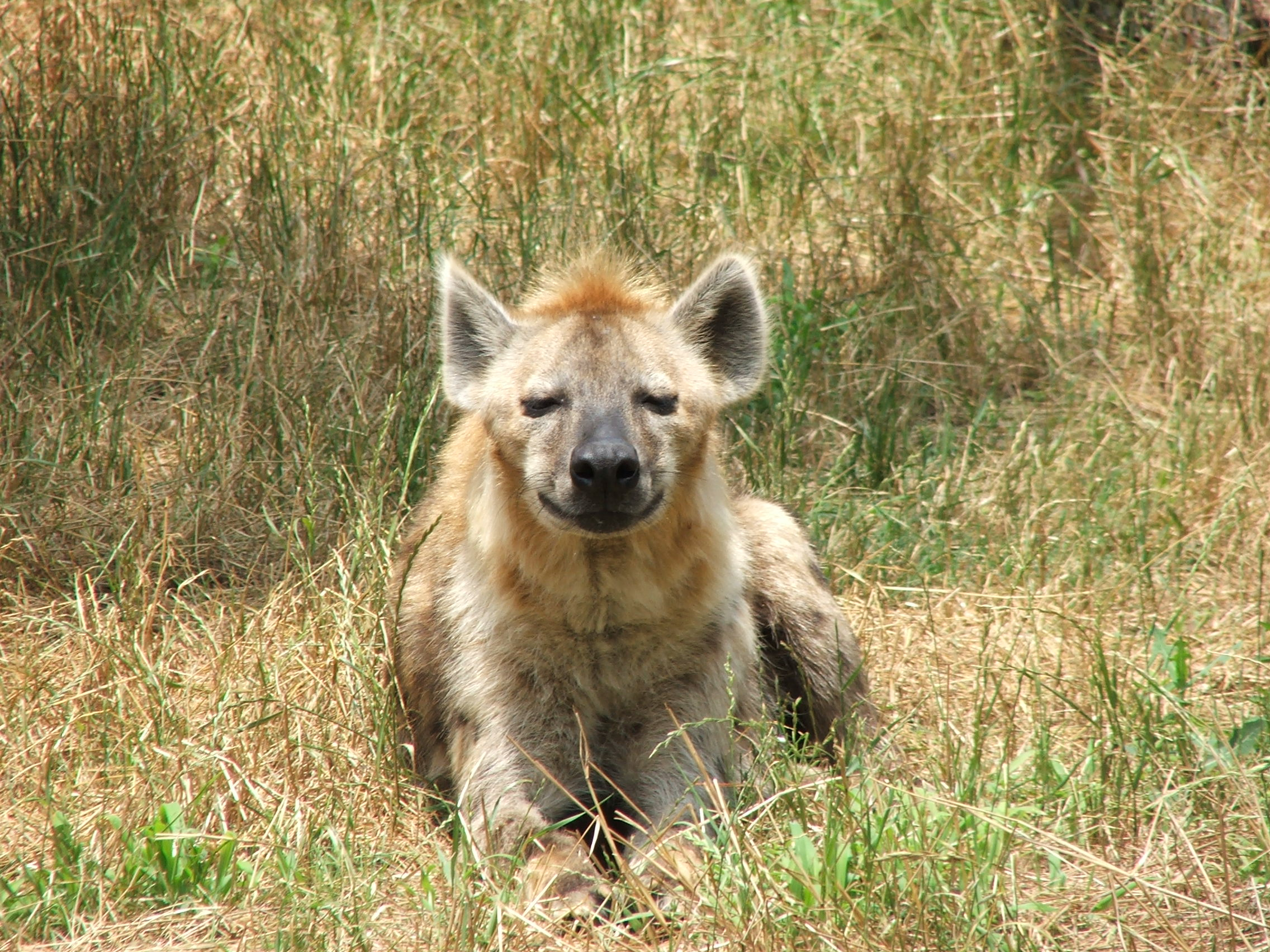 Did You Know? – Wildlife Research & Conservation