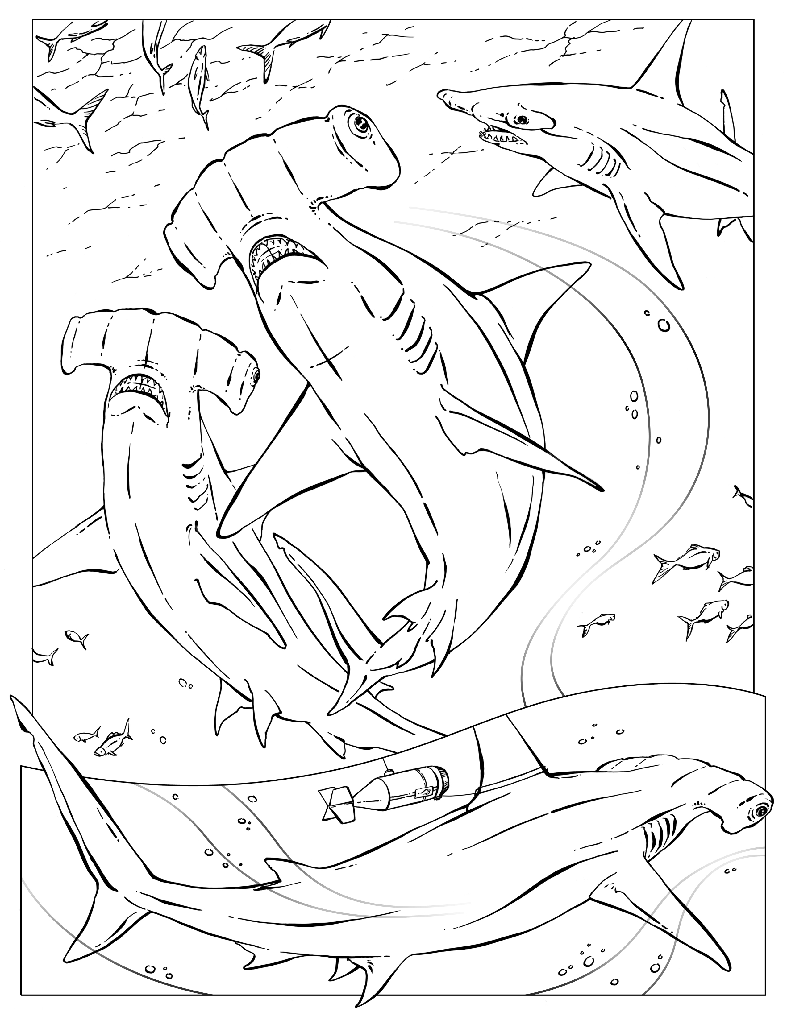 coloring pages u2013 wildlife research u0026 conservation