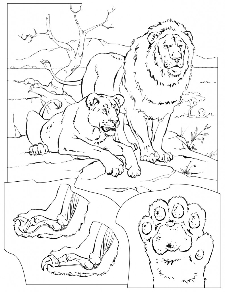 wildlife habitat coloring pages - photo#36