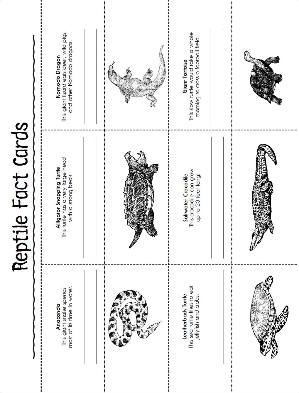Reptile | animal | Britannica.com
