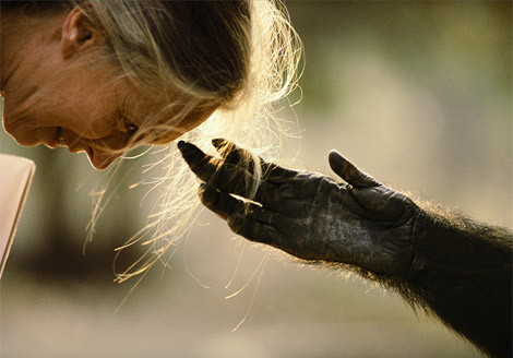 - jane-goodall-national-geography-photo2