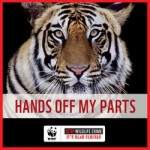 WWF_TigerHandsOff