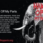 WWF_HandsOffMyParts