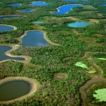 Pantanal-telegraph.co.uk