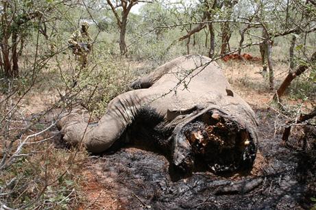 090225-elephants-poison-spears_big
