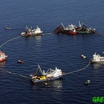 overfishing-of-tuna_greenpeace