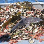 overfishing_bycatch_oceansoffun.org