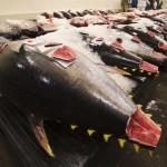 overfishing_earthtimes.org