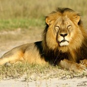 Cecil via slate.com