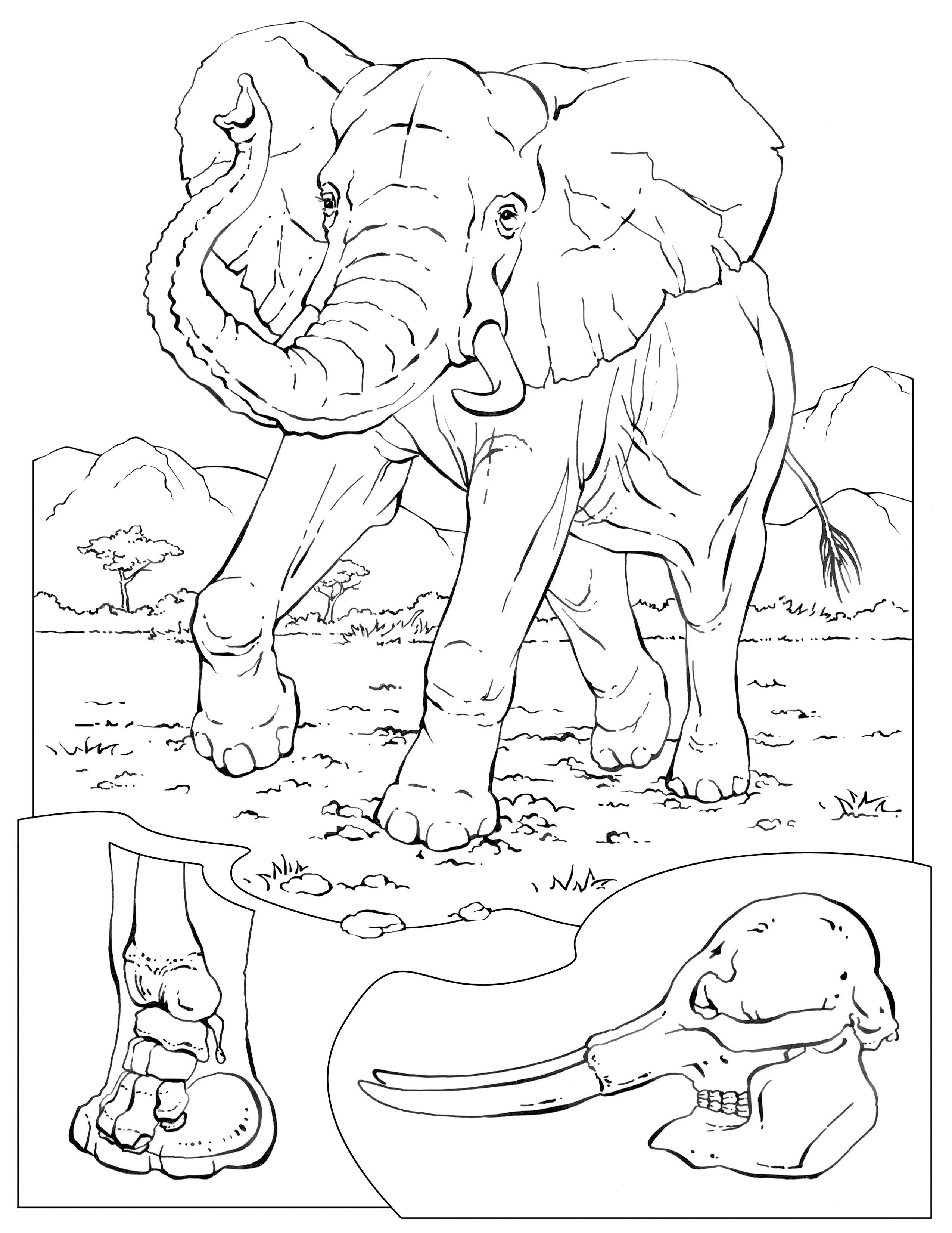 Coloring Pages - Wildlife Research & Conservation